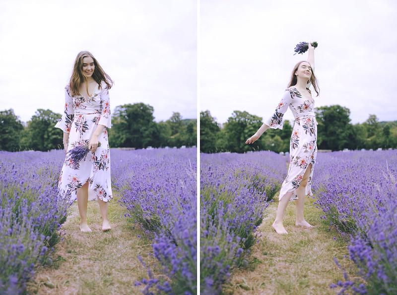 lavender dreams 1