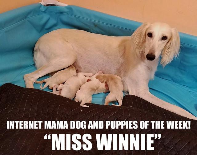 IKOTW Winnie and puppies