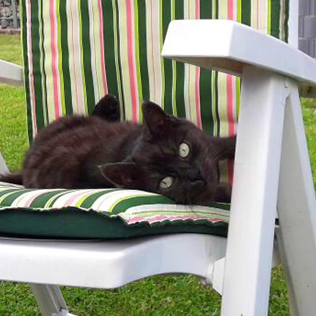 Katze Mimette auf dem Liegestuhl im Garten