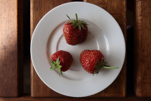 Erste Erdbeeren von unseren weiß blühenden Erdbeerpflanzen