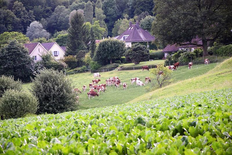 Feldbrunnen village 10 (1)