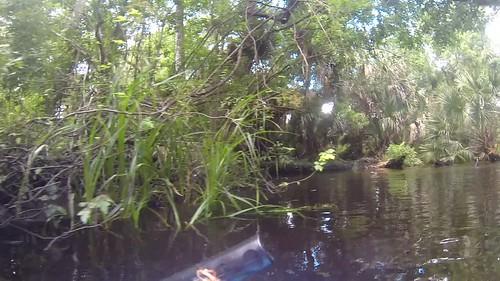 Juniper Springs Creek