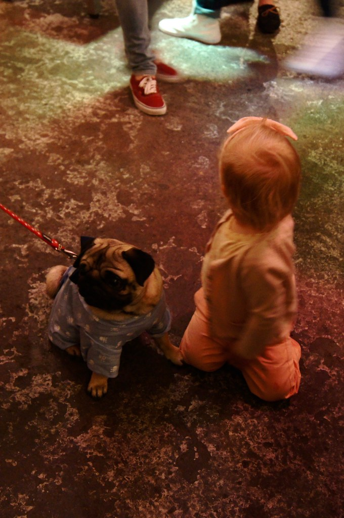 IWOOT baby and pug