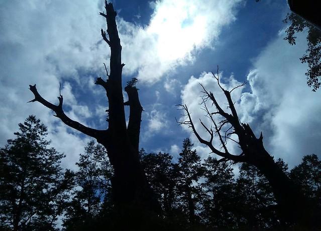 夫妻樹 (4)