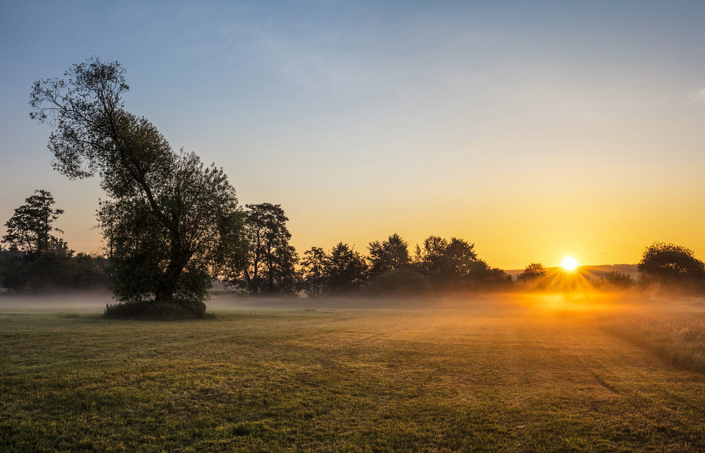 misty morning dawn | a foggy morning deep in the meadow ...