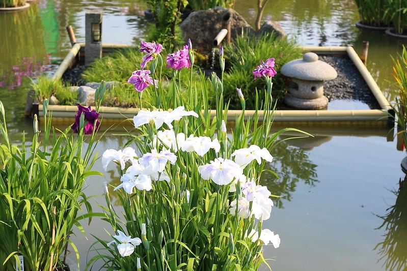 花しょうぶ園|大宰府天満宮
