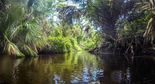 Juniper Springs Creek-23