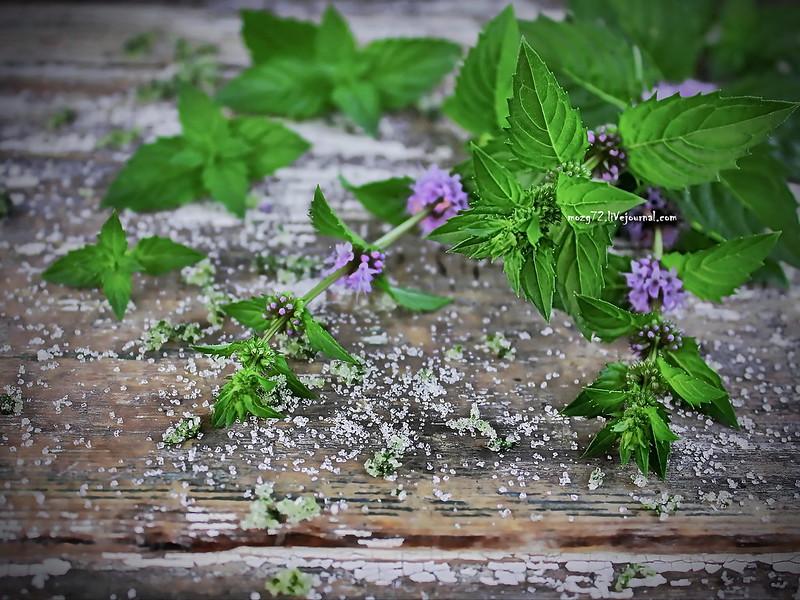 ...fresh mint in bloom