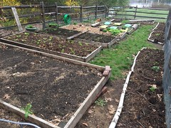 backyard garden 2017-04-27