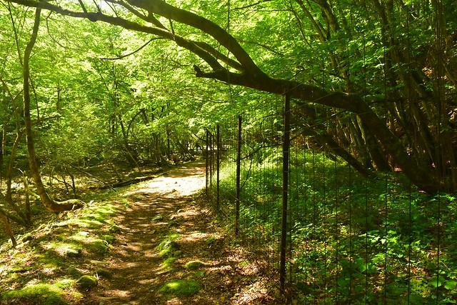 畦ヶ丸 鹿よけの柵