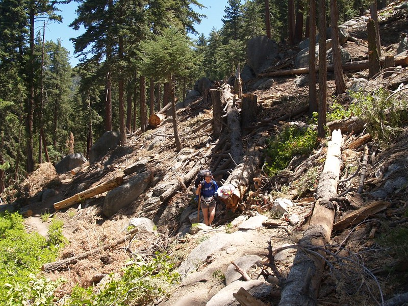 Hiking through an active logging operation can be hazardous, and messy