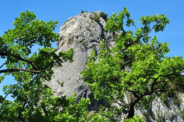 Provence-Urlaub, Juni ... die Baronnies (Les Baronnies) ... Buis-les-Baronnies ... Bergtour, Bergwanderung, Botanik ... Foto: Brigitte Stolle 2014