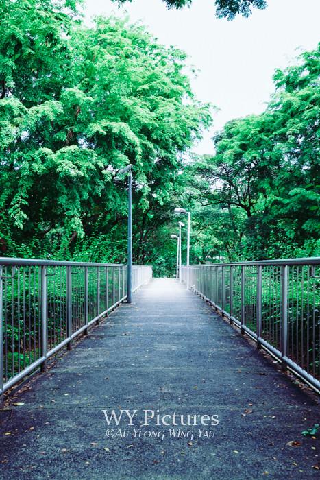 Singapore 2017: City Bridge Among Urban Greenery 2
