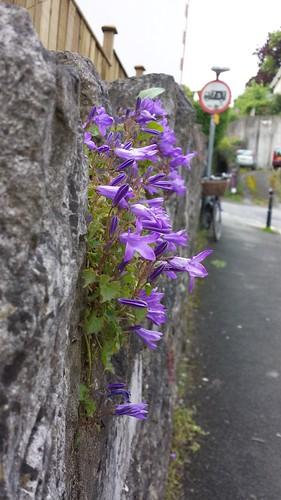 Totnes street