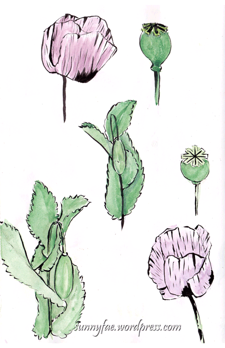 oriental poppies with brush pen