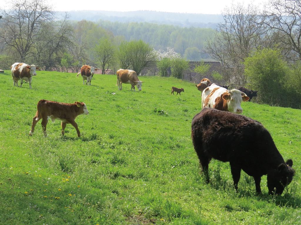 家庭的農業,生態的生活 (2)