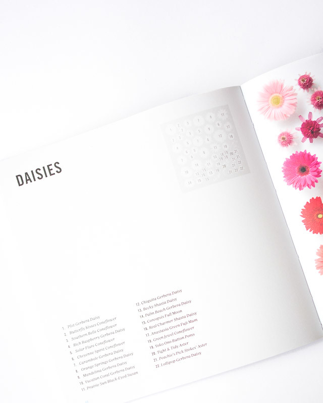 encyclopedia of rainbows | daisies