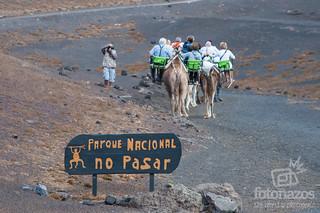 Fotos De Camellos De Reyes Magos Decorados Con Pompones