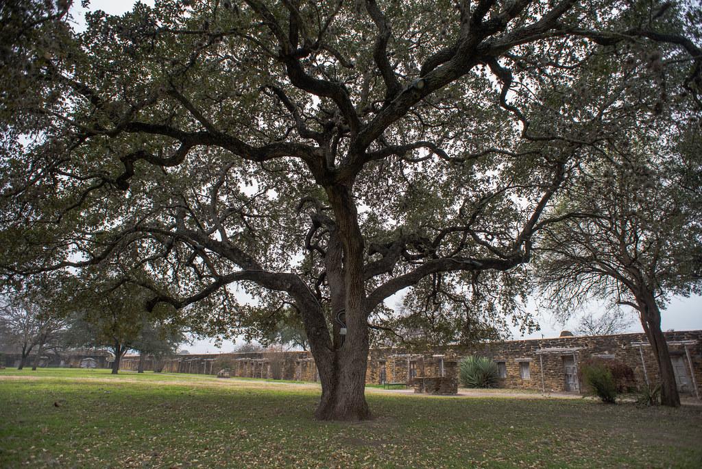 live oak mission san jose san antonio texas 04 feb flickr. Black Bedroom Furniture Sets. Home Design Ideas
