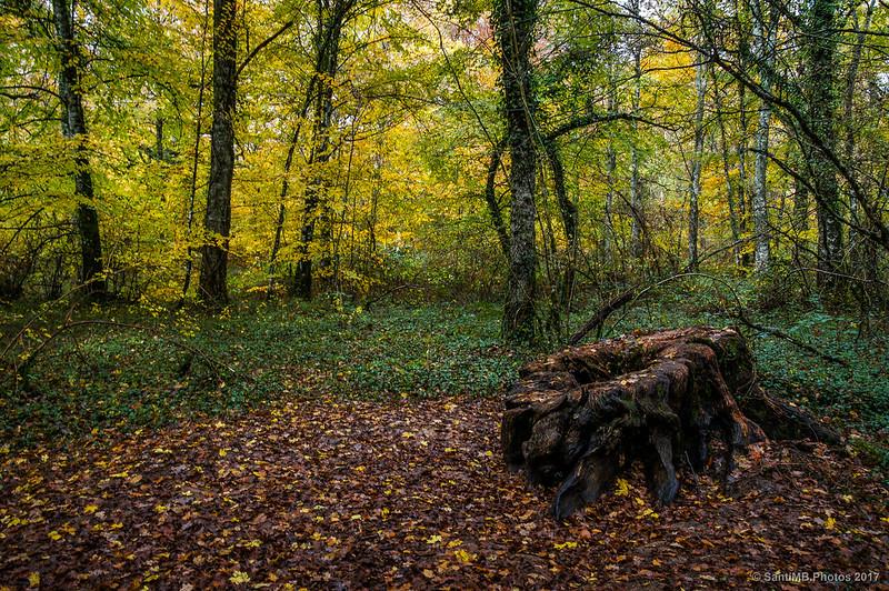 En el bosque de los Robles Milenarios