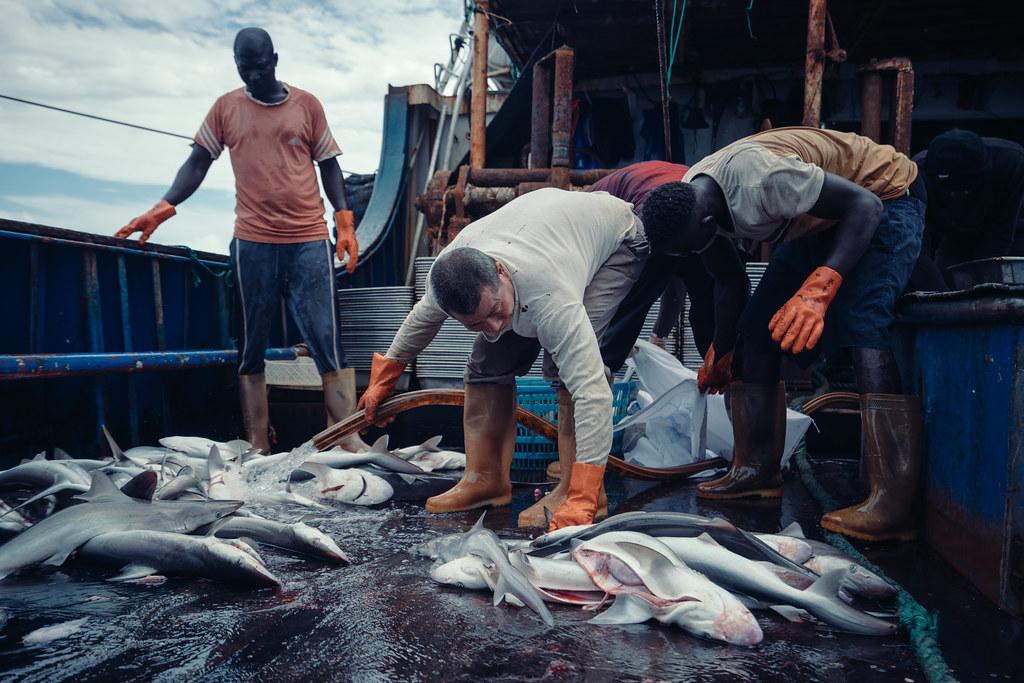 越走越遠的中國遠洋漁船,在西非捕撈漁獲的中國漁船。圖片來源:Liu Yuyang/Greenpeace