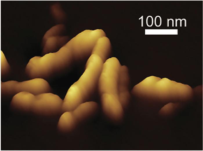 Atomic force microscope image of self-assembled nanocomposites.