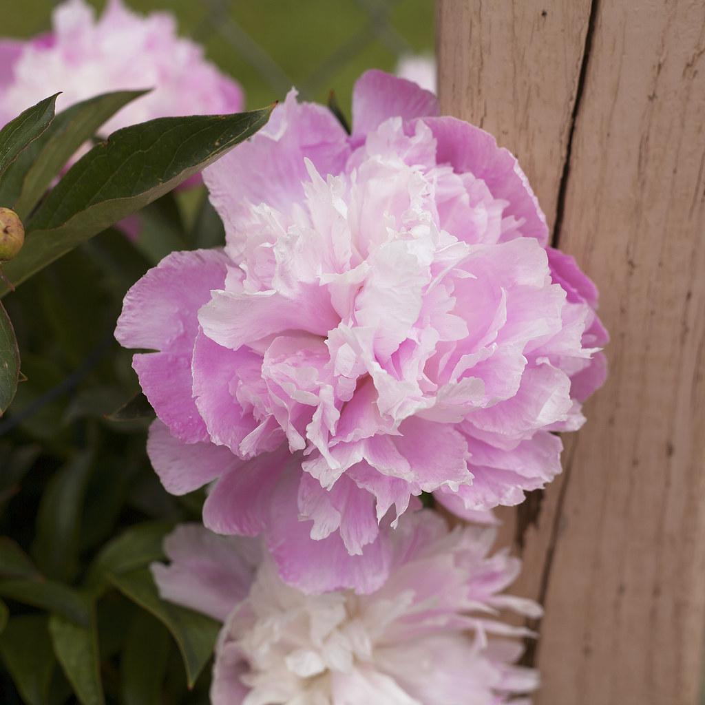 Pretty Little Pink Flowers Pt Iii Marisa Renee Flickr