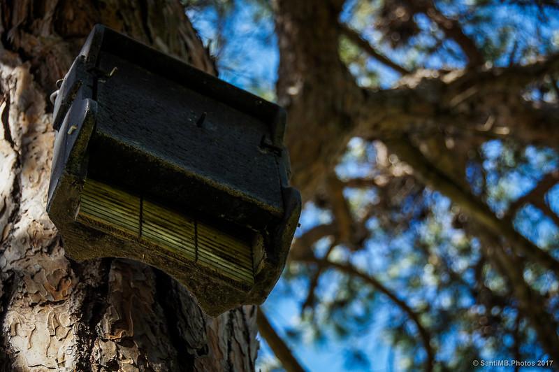 Nido de murciélagos en la Pineda de Ca l'Arana