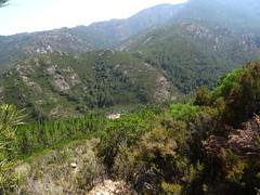 Sur le sentier de Pinetu Pianu : le Finicione depuis avant la pinède
