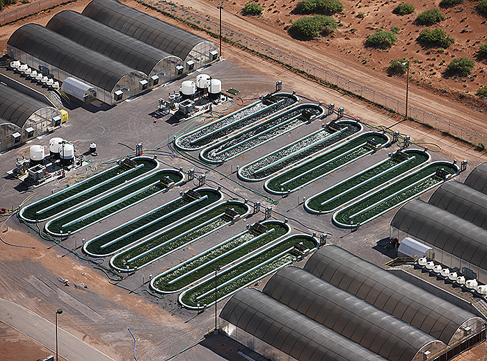 An aerial view of a 30,000L raceway, where Sapphire validates the performance of its cultivation strains by testing them at increasing spatial scales