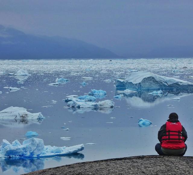 Sele ante un fiordo repleto de icebergs (Kayak en Groenlandia)
