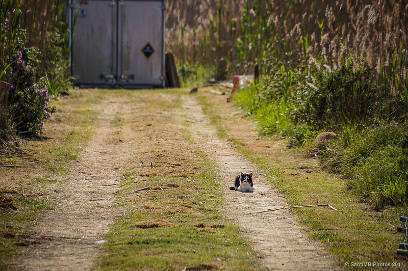Un gato observando