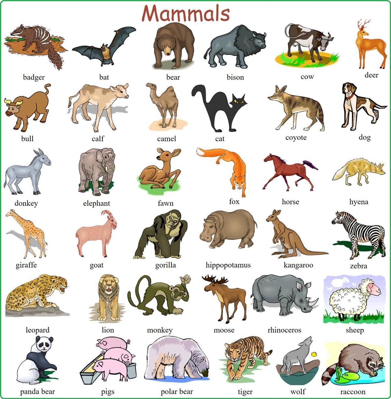 "Vocabulary: ""MAMMALS"" 3"