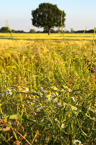 Summer in the Country | by A.Leighton Photography