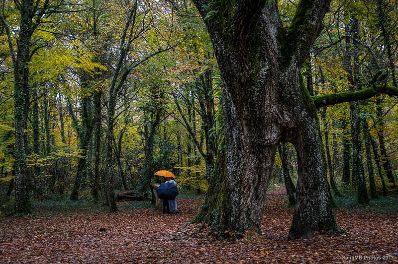 Bosque de los Robles Milenarios