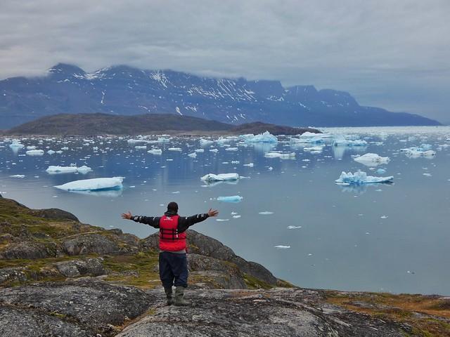Sele en Tasiusaq (Sur de Groenlandia)