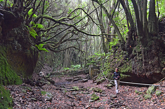 Forest walking, Zarza, La Palma