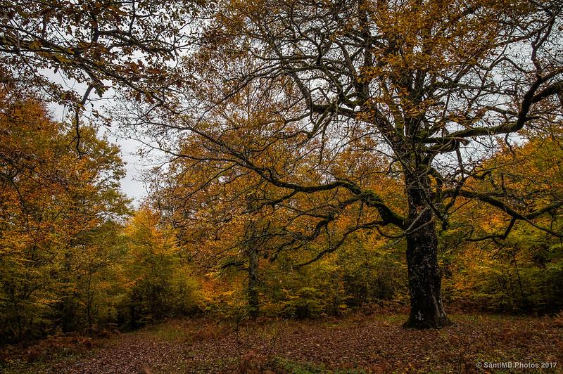 Bosque de los Robles Milenarios de Danbulintxulo