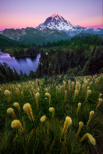 Twilight Light Shining On Beargrass On Mt Rainier | by kevin mcneal