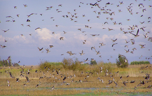 Waterfowl over ponds