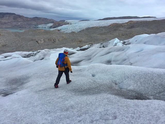 Sele en un glaciar de Groenlandia
