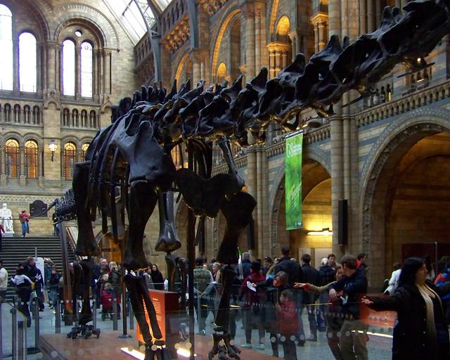 Dinosaurio dentro del museo de historia natural de Londres