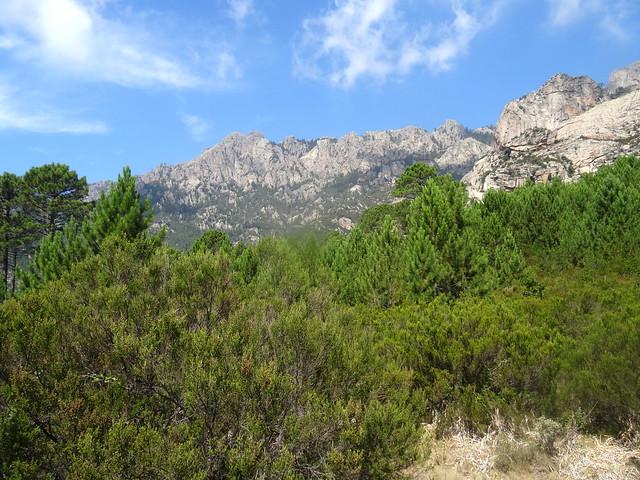 La crête Quercitella - Samulaghja depuis la clairière du centre du plateau