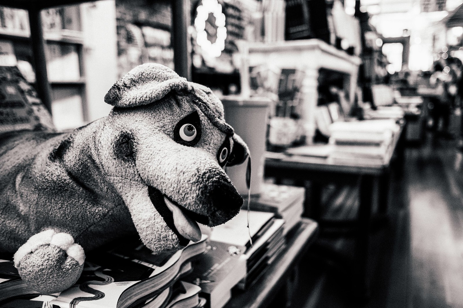 Stuffed Dog | by La Chachalaca Fotografía