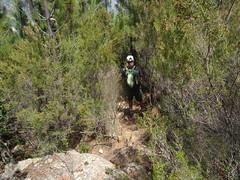 Sur le sentier de Pinetu Pianu : la trace dans la pinède