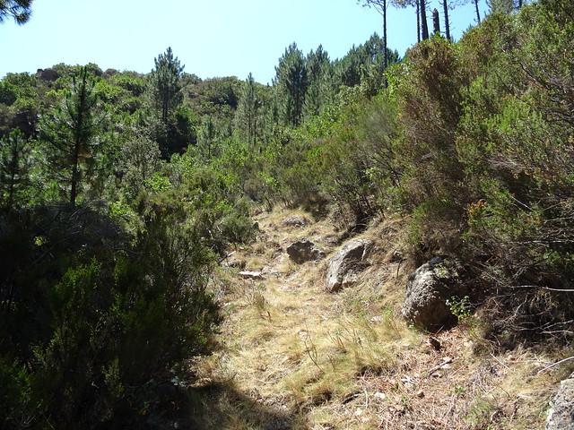 Le chemin après démaquisage dans la pente menant à Bocca di Ricu