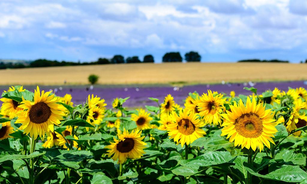 Summer Fields nude 654