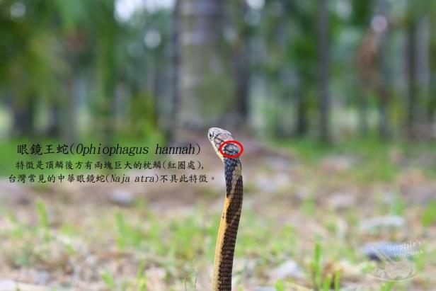 圖片來源:徐偉傑提供。