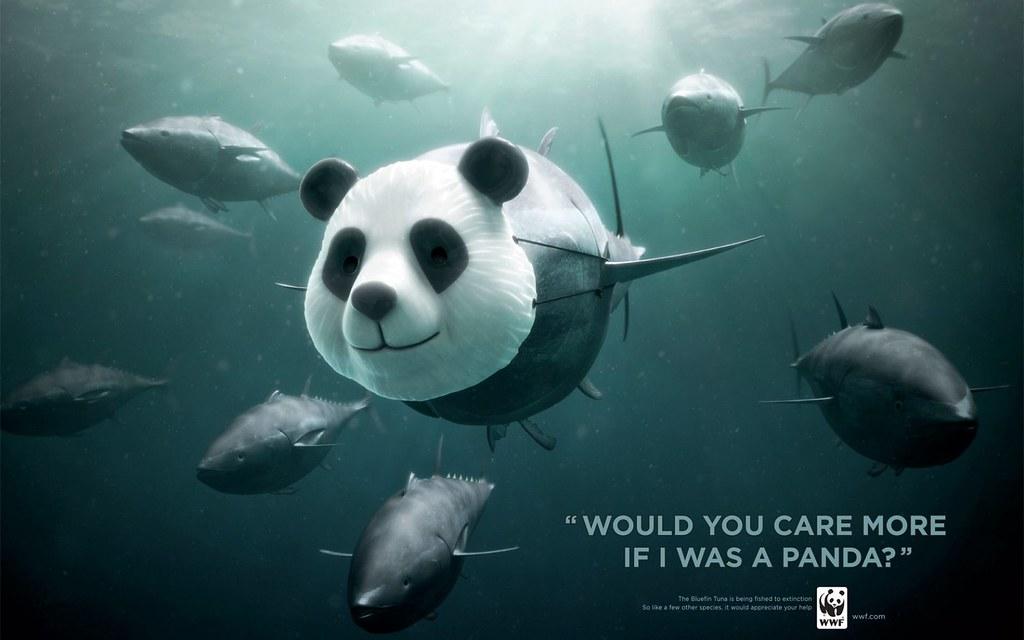 2011年WWF分別用世人熟悉的珍稀貓熊、黑猩猩和犀牛,來倡議保育藍鰭金槍魚。圖片來源:WWF。