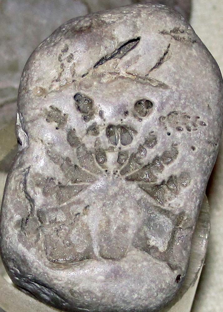 Eurypterid (fossil sea scorpion) (probably Silurian; South ...